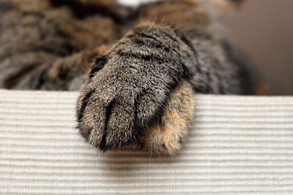 Cat's Paw Animal Animal Paw Pet Cats Paws Paw