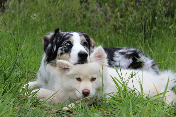 Two dogs sitting together on the grass