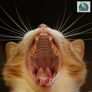 Healthy cat smiles come from Banderas Pet Hospital!